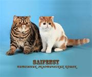 Saifensy питомник <br /> экзотических кошек